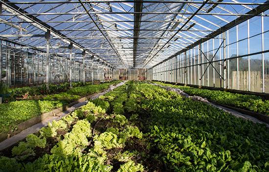 garden-green-house