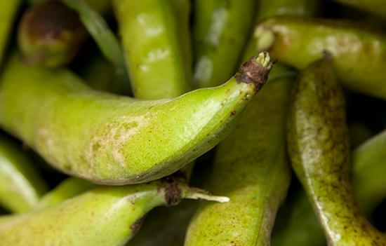 Loch Arthur Camphill Community, garden, beans