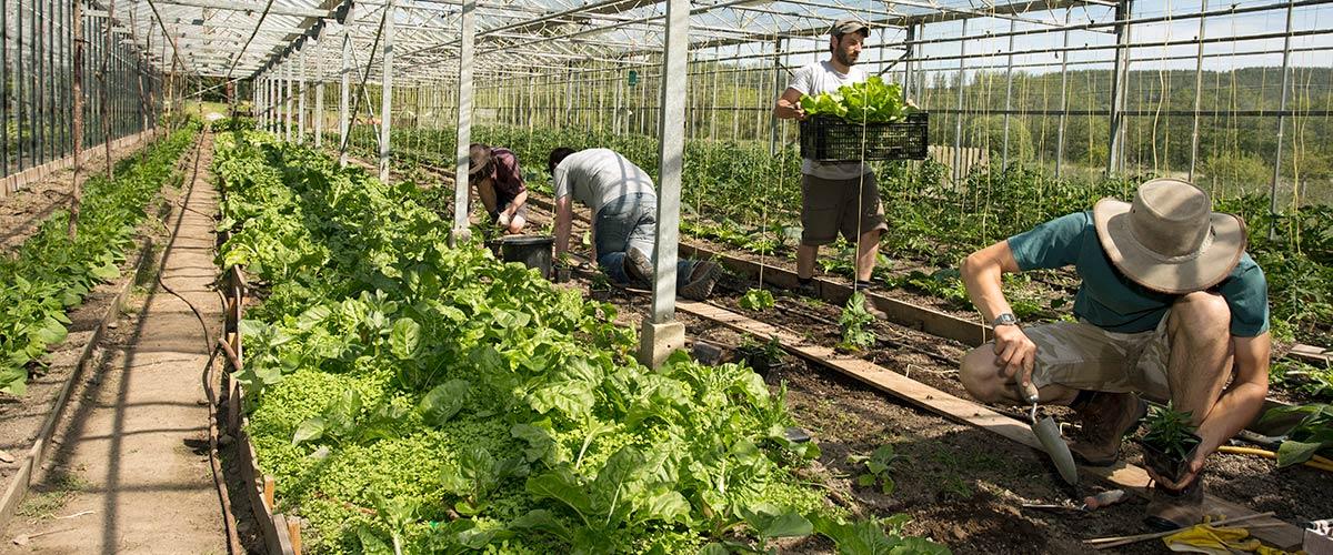 Loch Arthur Camphill Community, garden, greenhouse