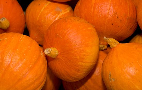 Loch Arthur Camphill Community, garden, pumpkin