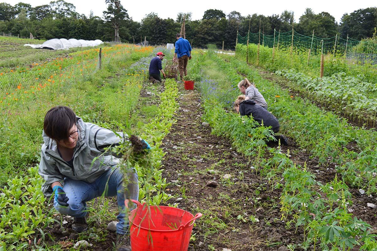 loch-arthur-camphill-community-garden-5