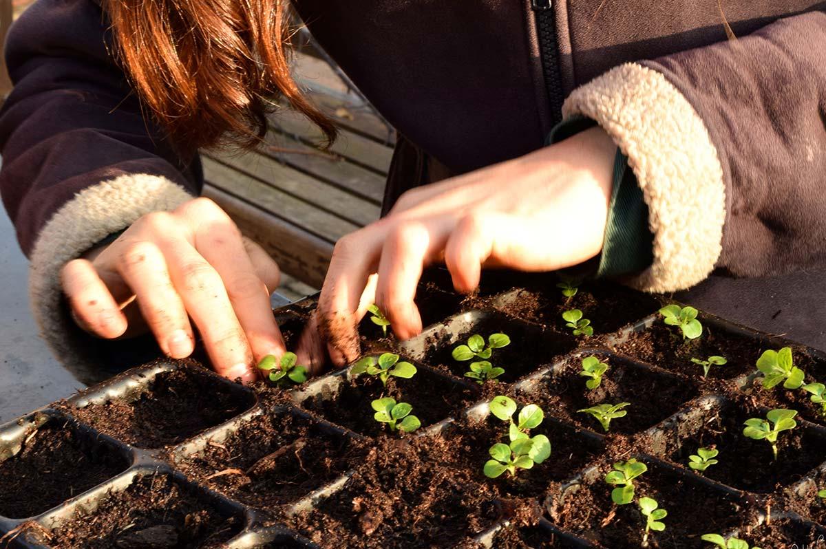 loch-arthur-camphill-community-garden-6