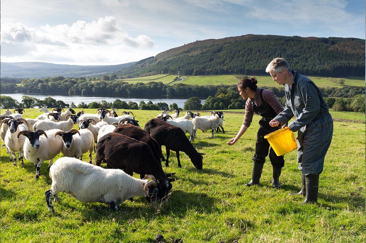 loch-arthur-camphill-community-farm-2