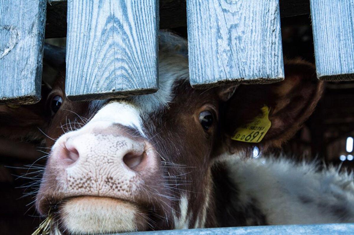 loch-arthur-camphill-community-farm-8